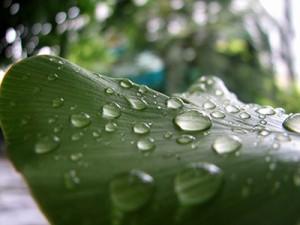 leaf-101